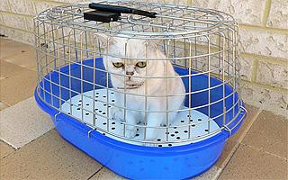 Выбор клетки для перевозки домашнего животного
